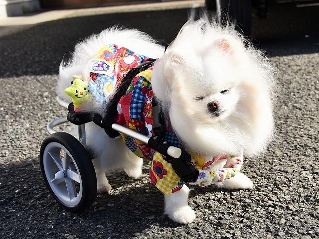 病院での会話・シニア犬あるある_d0360206_02141102.jpg