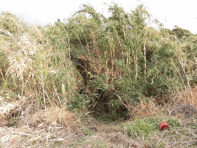 金属疲労?で草刈り機がポッキリも  滝川の竹林退治に向けて「完全武装」で通路確保_f0141310_08073679.jpg