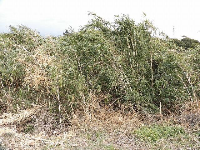 金属疲労?で草刈り機がポッキリも  滝川の竹林退治に向けて「完全武装」で通路確保_f0141310_08074740.jpg