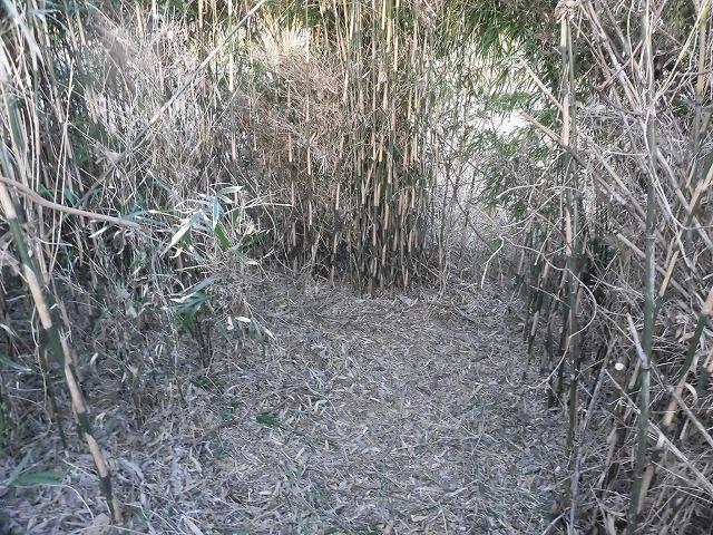 金属疲労?で草刈り機がポッキリも  滝川の竹林退治に向けて「完全武装」で通路確保_f0141310_08090736.jpg