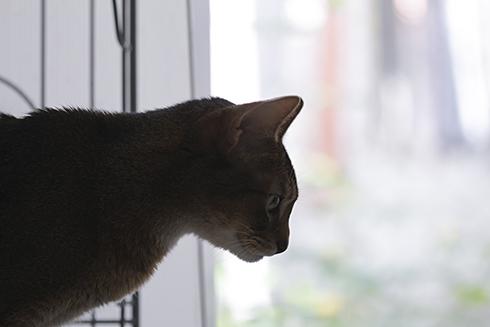 [猫的]高みの見物_e0090124_21570601.jpg
