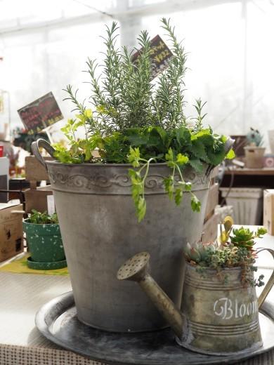 プレゼントは「春の寄せ植え」_f0139333_20023917.jpg