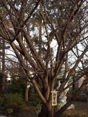 金沢文庫「運慶」展まで見たこと_f0211178_13090258.jpg