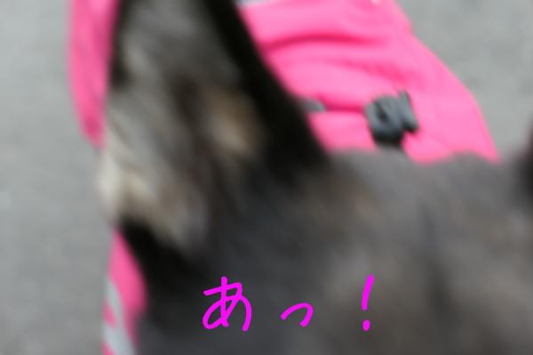 f0369014_13414612.jpg