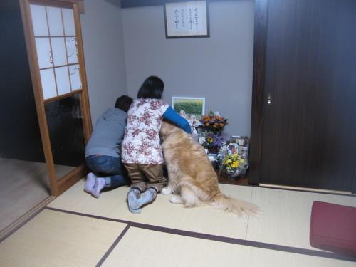 ハナちゃんへ_e0350927_14245849.jpg