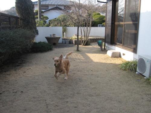 ゴーちゃんとあっちゃんとジョジョさん_e0350927_19073822.jpg