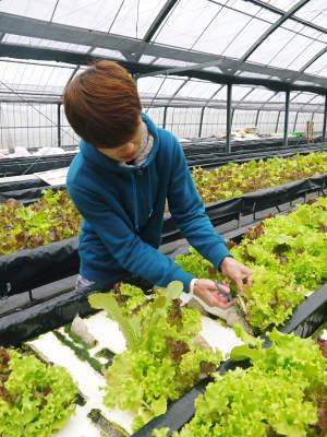 美味しいサラダ食べてますか?農薬を一切使用しない「水耕栽培の生野菜」大好評発売中!_a0254656_17393595.jpg
