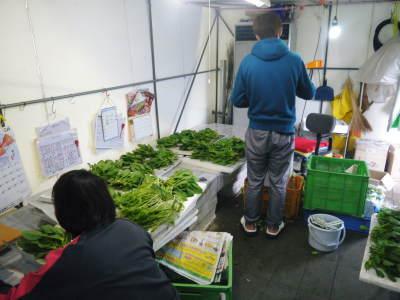 美味しいサラダ食べてますか?農薬を一切使用しない「水耕栽培の生野菜」大好評発売中!_a0254656_18002667.jpg