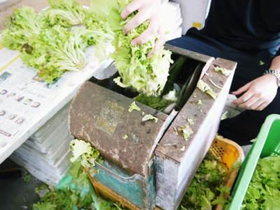 美味しいサラダ食べてますか?農薬を一切使用しない「水耕栽培の生野菜」大好評発売中!_a0254656_18032090.jpg