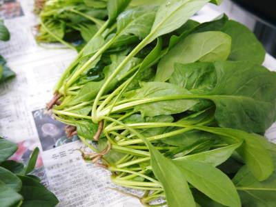 美味しいサラダ食べてますか?農薬を一切使用しない「水耕栽培の生野菜」大好評発売中!_a0254656_18053473.jpg