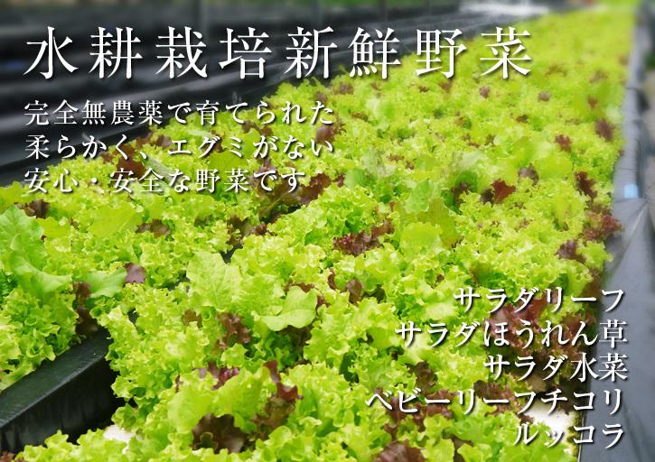 美味しいサラダ食べてますか?農薬を一切使用しない「水耕栽培の生野菜」大好評発売中!_a0254656_18233465.jpg