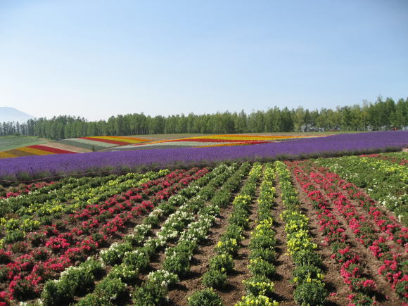 お花畑!_a0268377_21285149.jpg