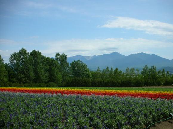 お花畑!_a0268377_21365912.jpg