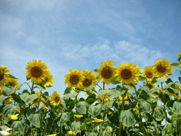 お花畑!_a0268377_21365951.jpg