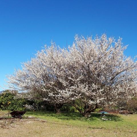 春を感じました♪_a0046888_22001838.jpg