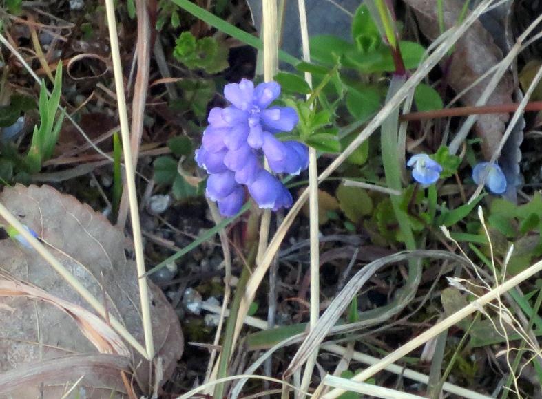 ■小さな春たち──週替わりの夕暮れ[3/11]_d0190217_21523016.jpg