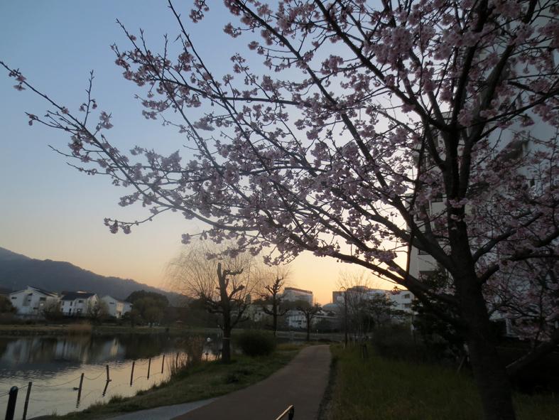 ■小さな春たち──週替わりの夕暮れ[3/11]_d0190217_21533102.jpg