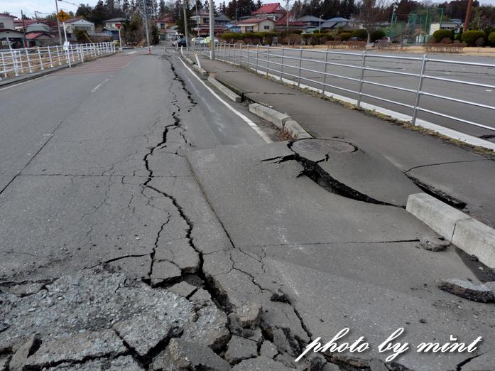 東日本大震災 今日で7年!癒された「ハヤブサ」さん♪今回の雪の中の「ミコアイサ」さん♪_e0218518_19335339.jpg