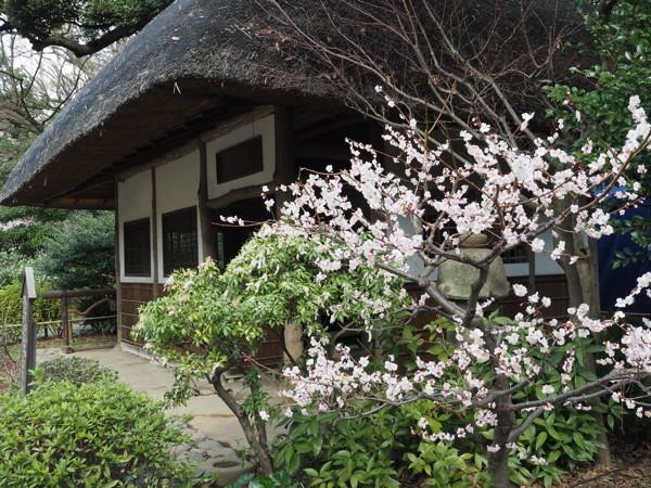 2018.3.11小石川後楽園_d0027243_22512107.jpg