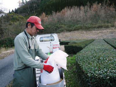 菊池水源茶 有機栽培のお茶に肥料を散布!厳しい基準がありました!_a0254656_17583727.jpg