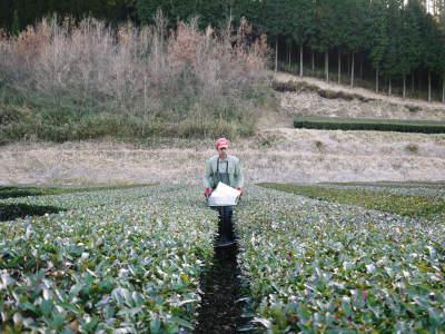 菊池水源茶 有機栽培のお茶に肥料を散布!厳しい基準がありました!_a0254656_18011004.jpg