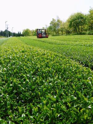 菊池水源茶 有機栽培のお茶に肥料を散布!厳しい基準がありました!_a0254656_18071118.jpg