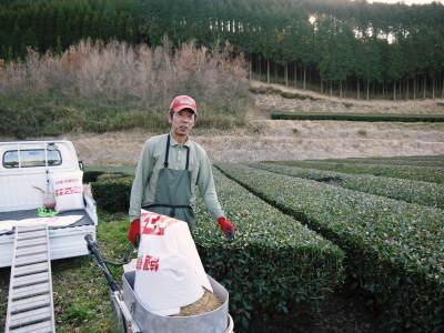 菊池水源茶 有機栽培のお茶に肥料を散布!厳しい基準がありました!_a0254656_18141642.jpg