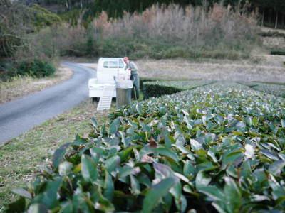 菊池水源茶 有機栽培のお茶に肥料を散布!厳しい基準がありました!_a0254656_18285761.jpg
