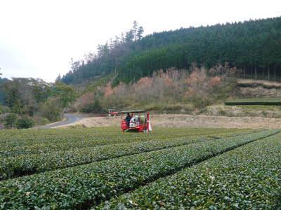 菊池水源茶 有機栽培のお茶に肥料を散布!厳しい基準がありました!_a0254656_18400019.jpg