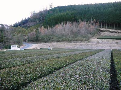 菊池水源茶 有機栽培のお茶に肥料を散布!厳しい基準がありました!_a0254656_18562659.jpg
