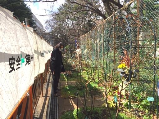 2018年3月月例会「駒場野公園草花/植え付け」「バラの小径/追肥と除草」_a0094959_21162893.jpg