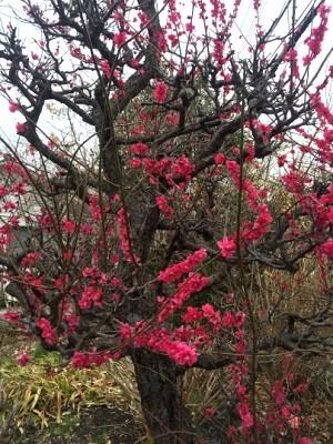 春の足音_e0263559_00222631.jpg