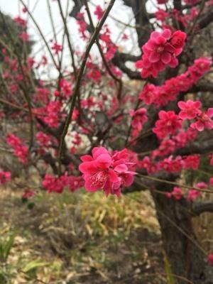 春の足音_e0263559_00223121.jpg