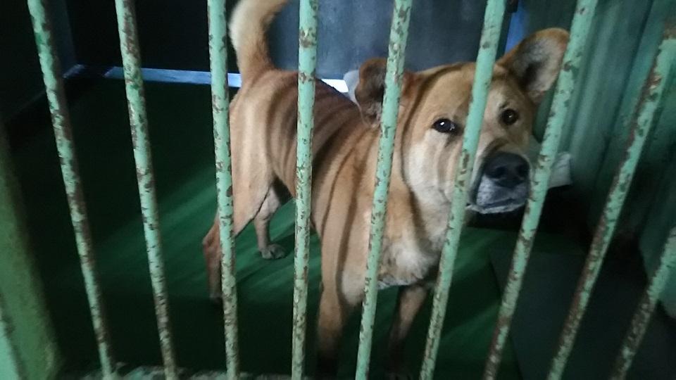 【犬猫・移動先募集】センター(支所)収容(3/10訪問)_f0242002_22371216.jpg