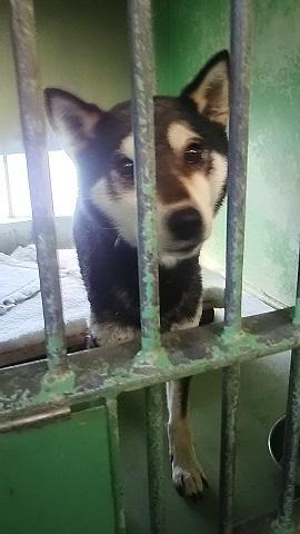 【犬猫・移動先募集】センター(支所)収容(3/10訪問)_f0242002_22373266.jpg
