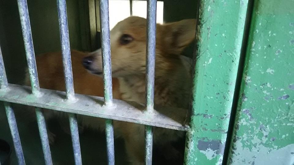 【犬猫・移動先募集】センター(支所)収容(3/10訪問)_f0242002_22381466.jpg