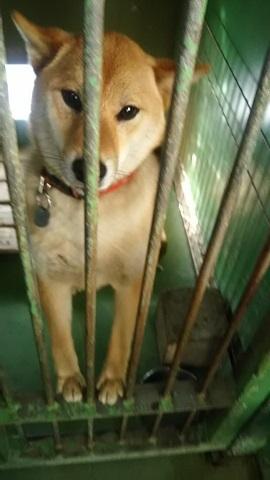 【犬猫・移動先募集】センター(支所)収容(3/10訪問)_f0242002_22383410.jpg