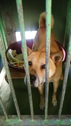 【犬猫・移動先募集】センター(支所)収容(3/10訪問)_f0242002_22384980.jpg