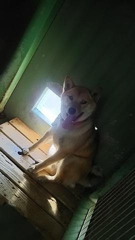 【犬猫・移動先募集】センター(支所)収容(3/10訪問)_f0242002_22391167.jpg