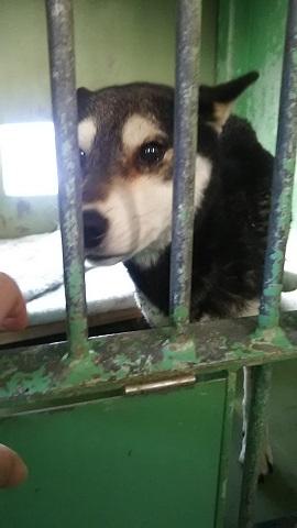 【犬猫・移動先募集】センター(支所)収容(3/10訪問)_f0242002_22450331.jpg