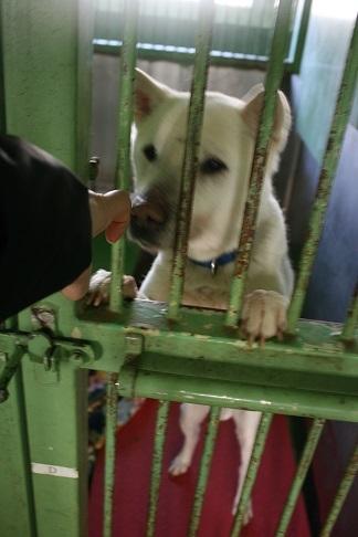 【犬猫・移動先募集】センター(支所)収容(3/10訪問)_f0242002_23095044.jpg