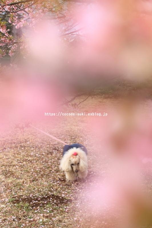 d0367763_13452597.jpg