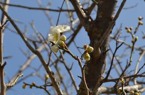 山の春色、三色_b0102572_1772959.jpg