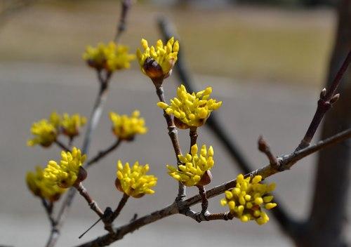 山の春色、三色_b0102572_1774577.jpg