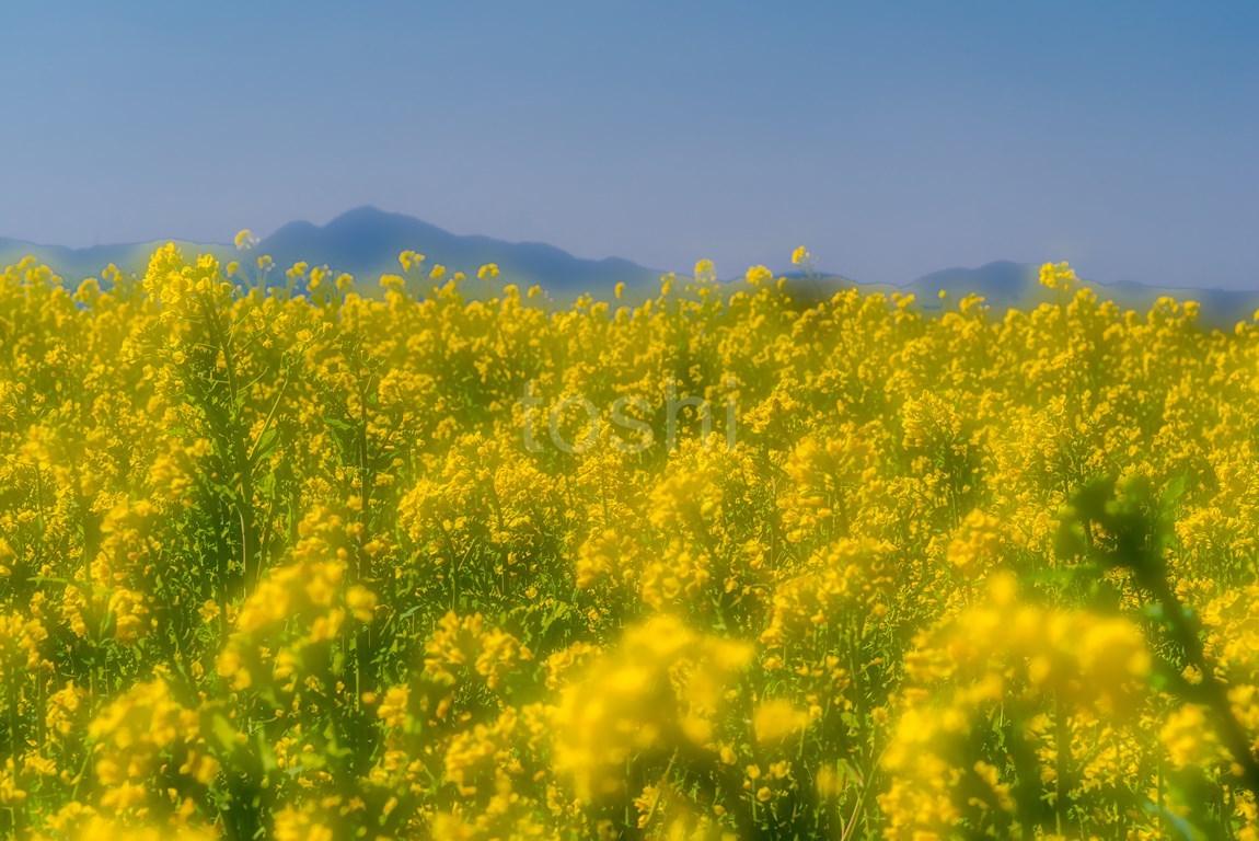 春が来た!_c0350572_22444140.jpg