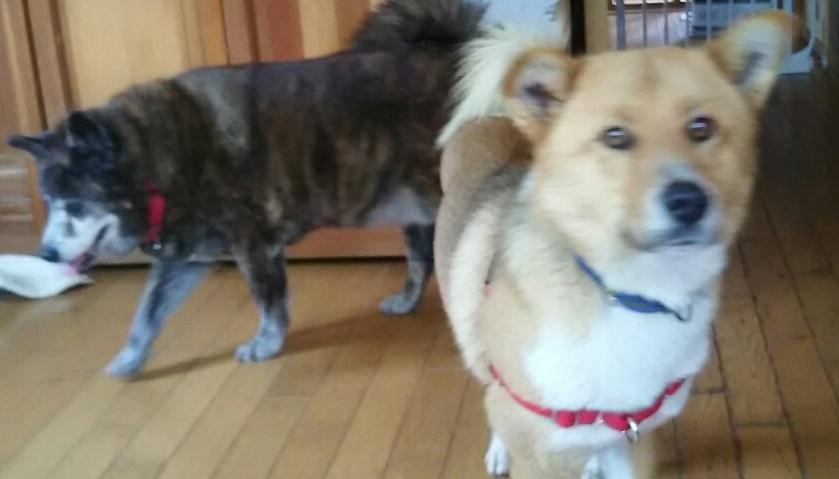【犬猫・移動先募集】センター(支所)収容(3/10訪問)_f0242002_00593688.jpg