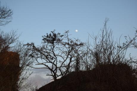 2018年1月29日 千葉房州の山、高宕山へ_c0242406_16393174.jpg