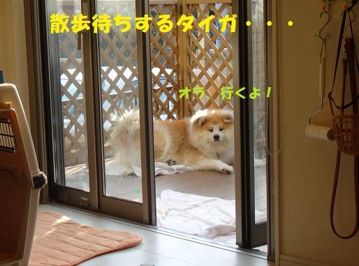 f0121712_07515069.jpg