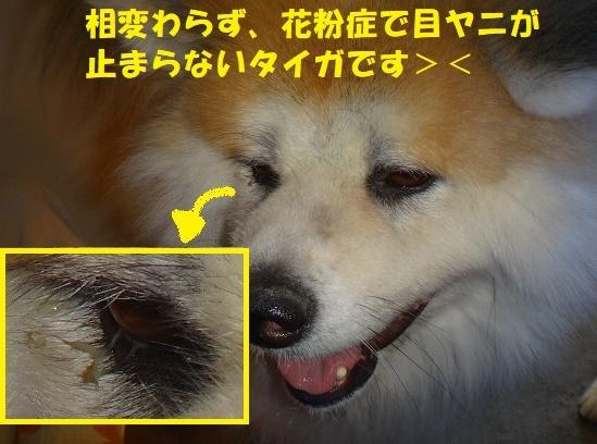 f0121712_07520149.jpg