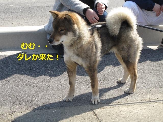 f0143123_10251371.jpg